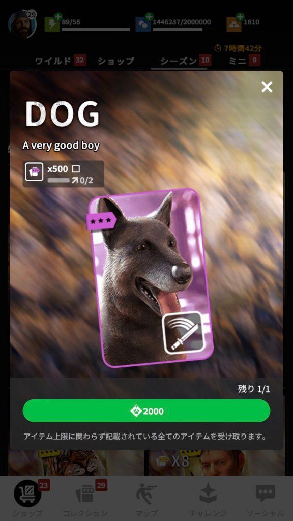 DOG画像